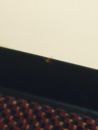 Village Inn of Destin: Another large spider