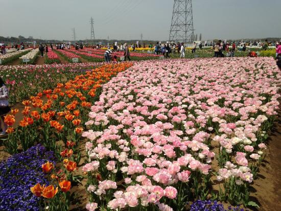 Sakura Furusato Square