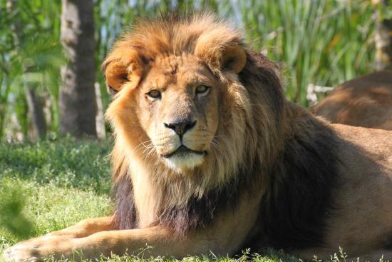 Zoo African Safari