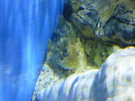 Aquaworld Aquarium & Reptile Rescue Centre: Fish Tank