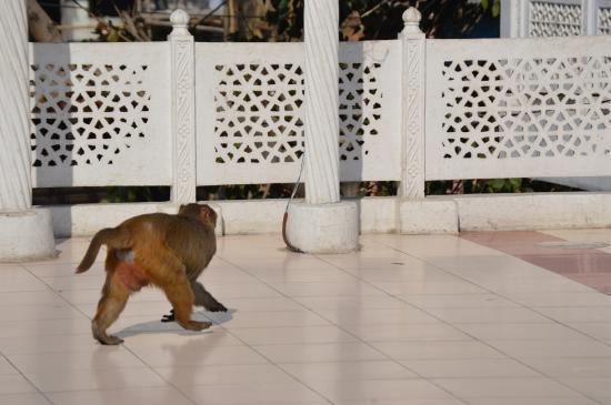 Hotel Daawat Palace: Monkeys stopped by daily on the terrace outside my room