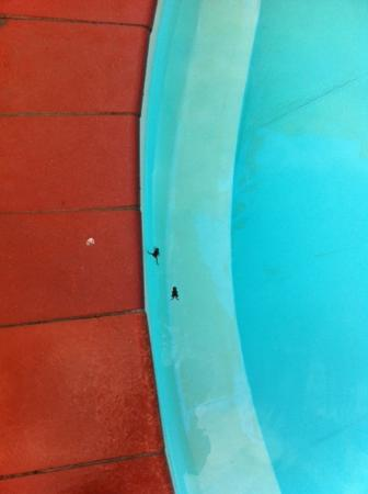 Agriturismo Il Sapito: rane piscina sapito