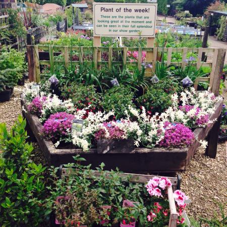 Whitlenge Garden Centre and Tea Rooms