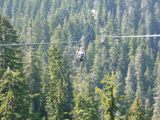 Grouse Mountain Ziplines What An Amazing Experience