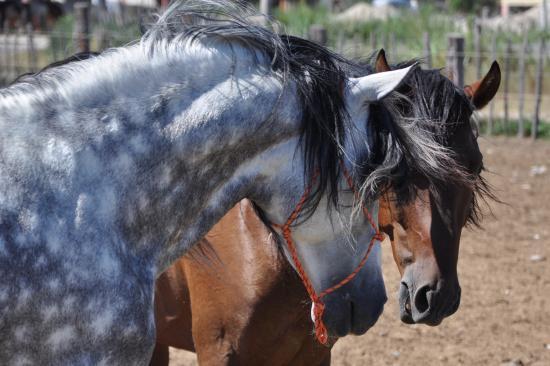 El Rancho: Les plus beaux chevaux de l'espiguette