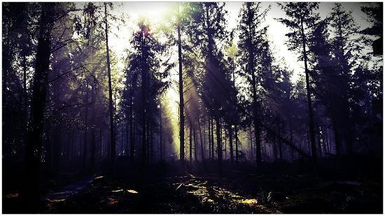 Devon, UK: Misty Morning