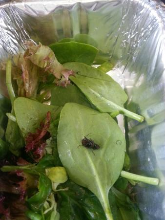 Bug found in Food at Havet Bromley!!!!!!