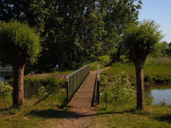Knoops Park: 05/06/2015 - de bike