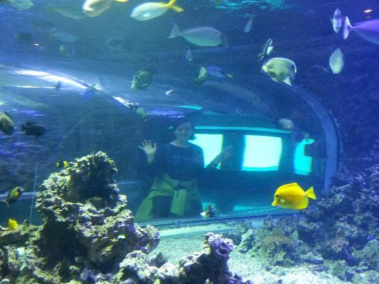Finding Nemo - Picture of Bergen Aquarium, Bergen - TripAdvisor
