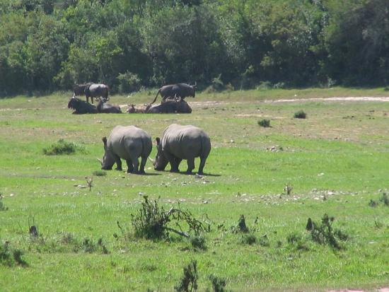 Buffalo Hills Lodge and Safaris: Buffalo Hills - so much wild life right in front of you!