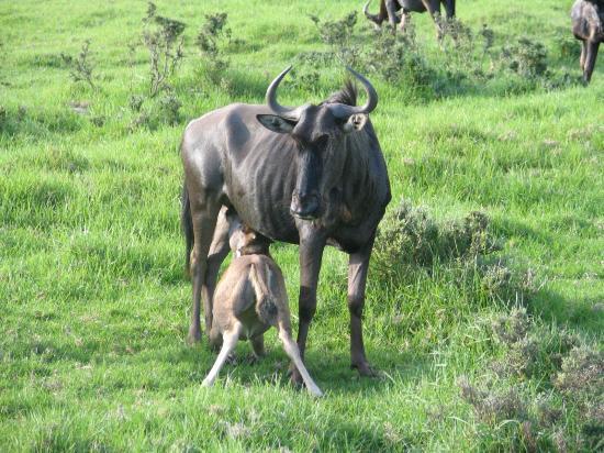 Buffalo Hills Lodge and Safaris: Buffalo Hills mum & baby