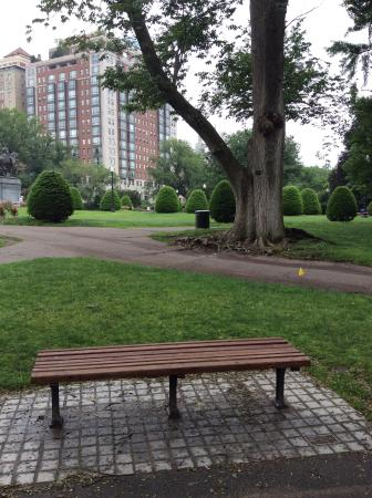 Bench From Good Will Hunting Now A Tribute To Robin