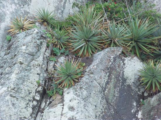 Itapeva State Park: vegetação litorânea