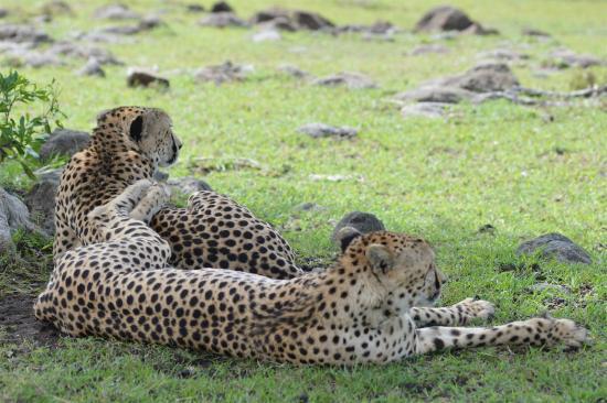 Losokwan Camp Maasai Mara: Wildlife at the camp