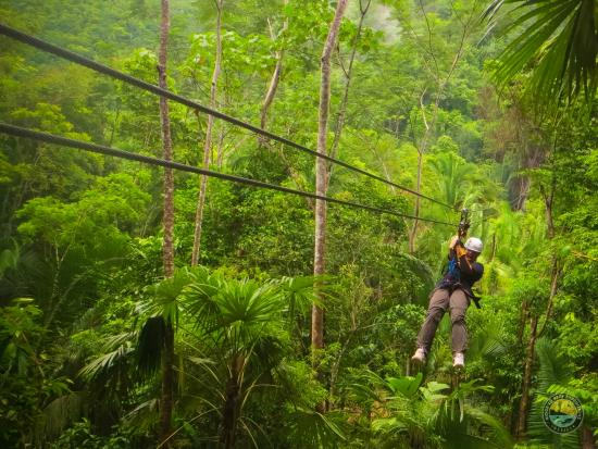 Tide Tours - Day Tours: Zip-line through the lush forest
