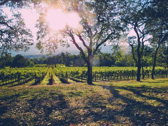 Grapeline Wine Tours - Sonoma