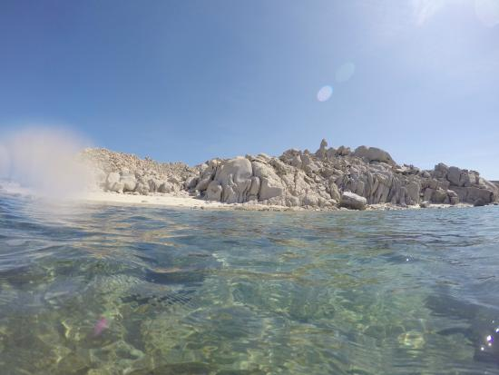 Shallow Dive Picture Of Cabo Pulmo Marine Preserve Cabo