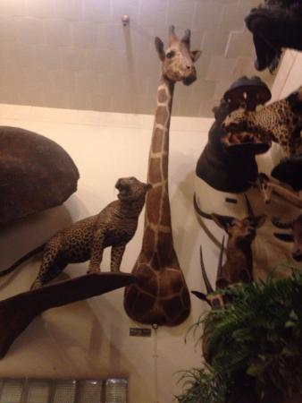 Foster's Bighorn: Exotic animals of all kinds!