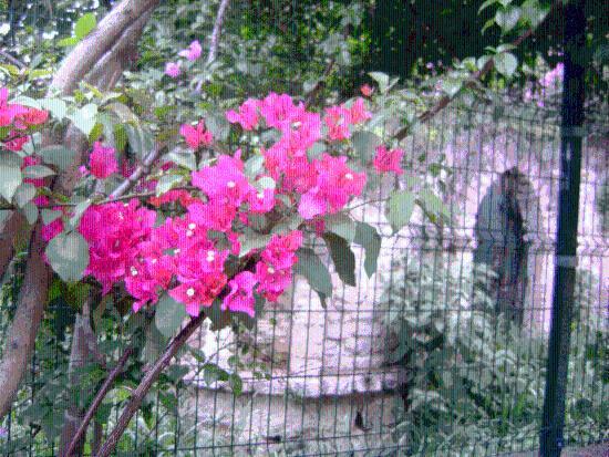 Tegucigalpa, Honduras: getlstd_property_photo
