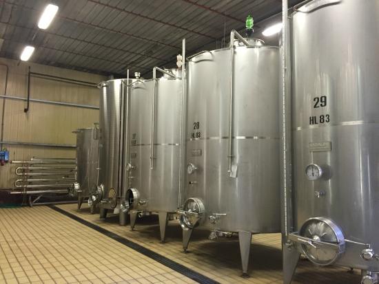 Tenuta Valdipiatta: Fermentation tanks