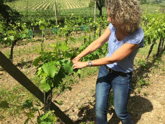 Tenuta Valdipiatta: Out in the vineyard