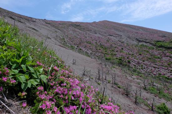 Kagoshima Prefecture, Japonya: ミヤマキリシマが広がる山肌