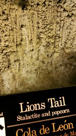 The Lions Tail - Picture of Lion's Tail, Carlsbad Caverns National ...