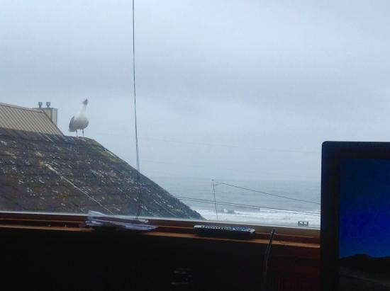 Breyhouse Ocean View Bed and Breakfast Inn: Seagull perched on roof outside our window