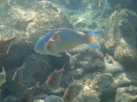 Amangwane - Kosi Bay : Some snorkelling