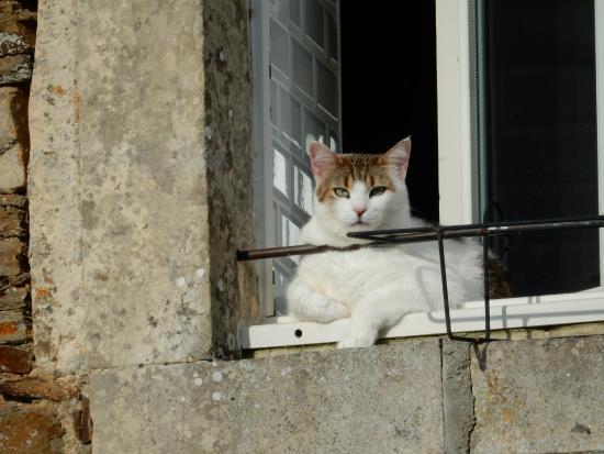 Saint-Louet-sur-Seulles, Francia: Cat enjoying the sun.