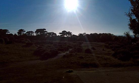 Ganton Golf Club: View from 18th tee.