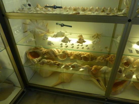 Sea Shells Collection - Picture of Maritime Museum of ...