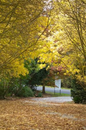 Yarra Valley Guest House: Autumn Photo
