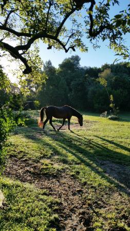 The resident Horse