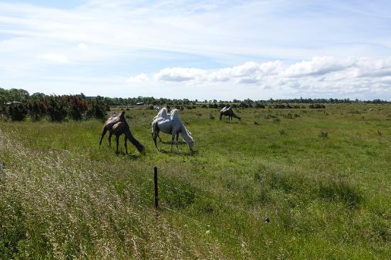 Lottorp, สวีเดน: Die Kamele der Ranch