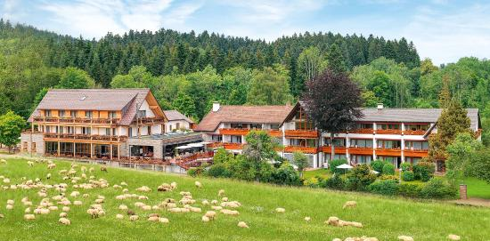 Photo of Hotel Gruner Wald Lauterbad