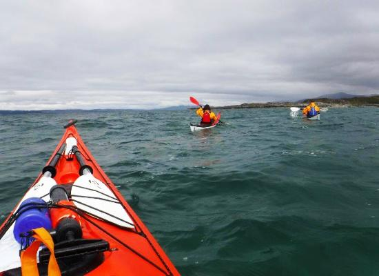 An Otter Having A Quick Shufty Picture Of Sea Kayak Arisaig