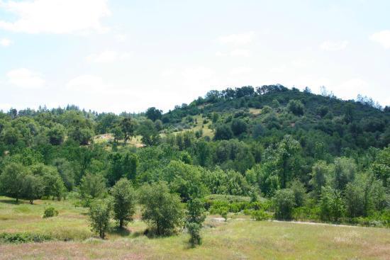 แกรสเวลลีย์, แคลิฟอร์เนีย: A view from my daily walk