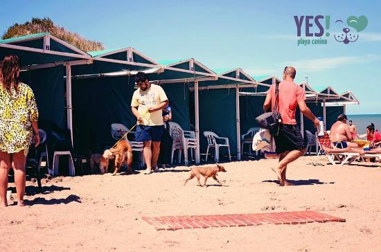 Yes! Playa Canina