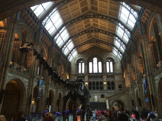Museum Of Natural History London Entrance Fee