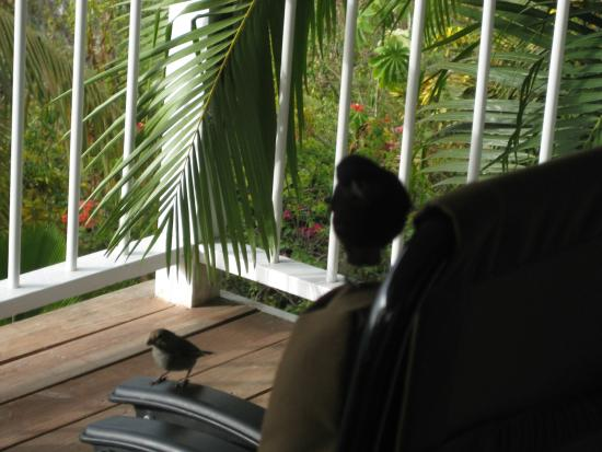 Nature's Paradise: This bird ate from my hand!