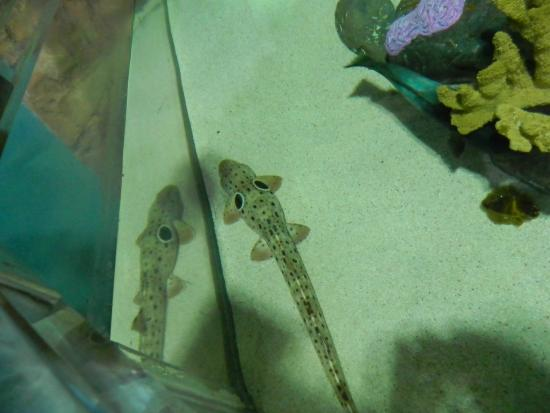 National Sea Life Centre - Picture of National Sea Life Centre ...