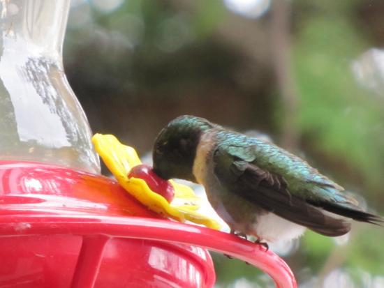 Bearskin Lodge : Hummingbird at Cabin 4