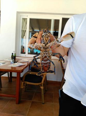restaurante la fragata la fragata formentera u casas u restaurante