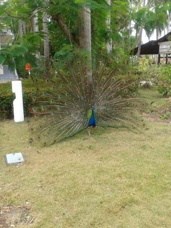 Vista Sol Punta Cana: Garten