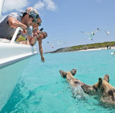 Great Exuma: Exumas Cays Ocean Safari at Island Routes Bahamas