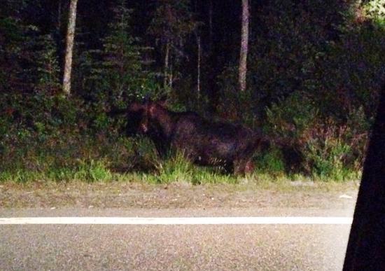 Gorham Moose Tours : photo0.jpg