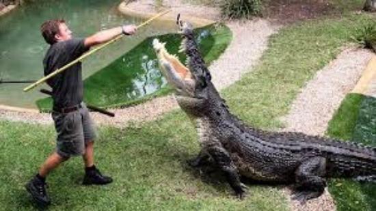 澳大利亚爬行动物园
