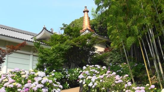 Hondo-ji Temple : 宝物館と紫陽花