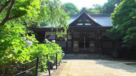 Hondo-ji Temple : 祖師堂と紫陽花